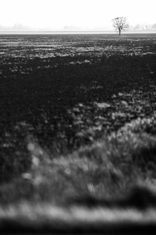 landscape (17)