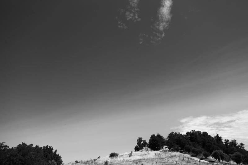 landscape (42)