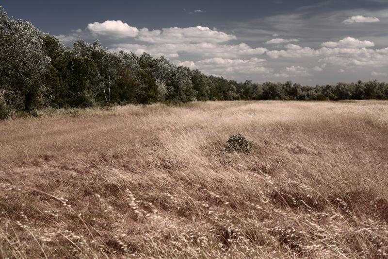 landscape (44)