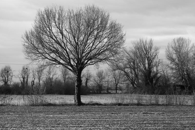 landscape (58)